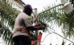 Mejorando la iluminación en el Parque Reyna Barrios