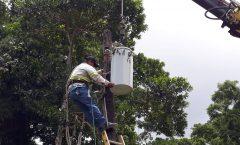 Un árbol cayó sobre un poste de la Energía Eléctrica en calle hacia Pichilingo
